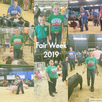 Fair Week: Swine Show